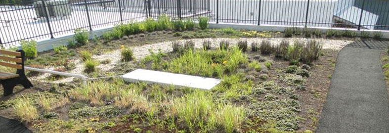replacements_sustainable_vegetated-roof-2-787x269